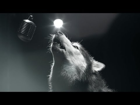 Dogs Sing For A Cure - We Could Be Heroes