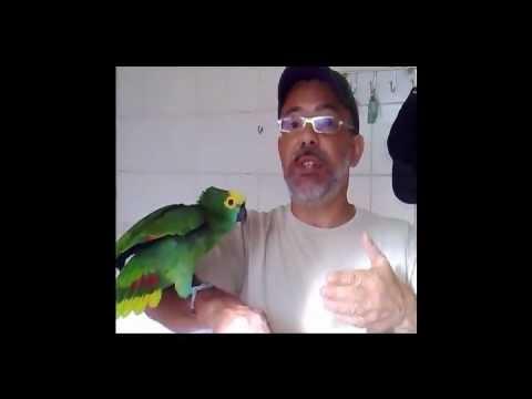 Dica Animal - Papagaios