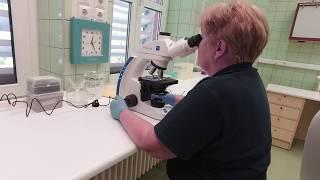 Bőrgyógyászati Klinika