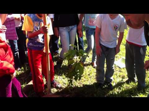 Plantio Fórum Vila Mimosa
