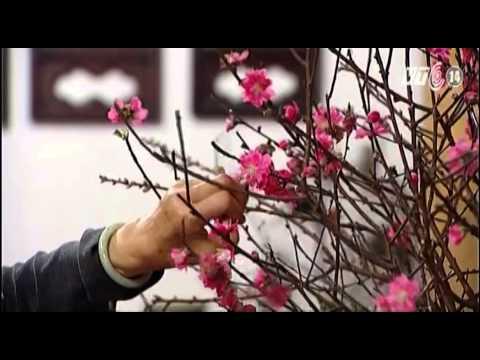 VTC14_Tri thức người xưa: Mùa xuân, làm đẹp và chữa bệnh bằng hoa đào