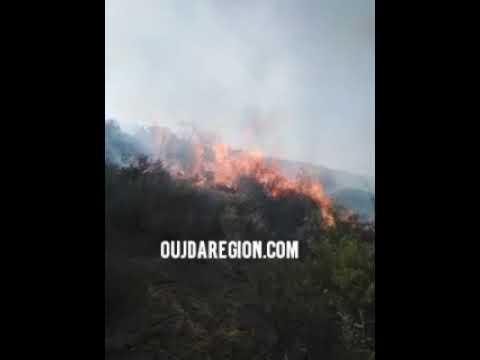 فيديو…تعرفوا على من تسبب في حريق 2 هكتارات من غابة بني زناسن