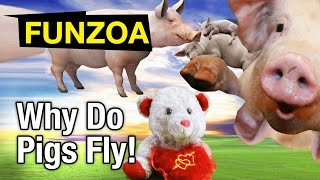 Why Do Pigs Fly Funny Song/Lullaby/ Funzoa Mimi Teddy Video