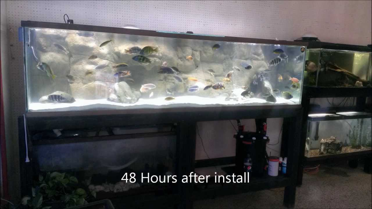 how to clean cichlid sand