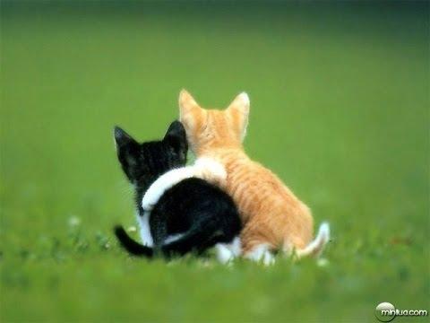 Frases curtas de Amizade, imagens Com frase de amizade, frases evangelicas de Amizade