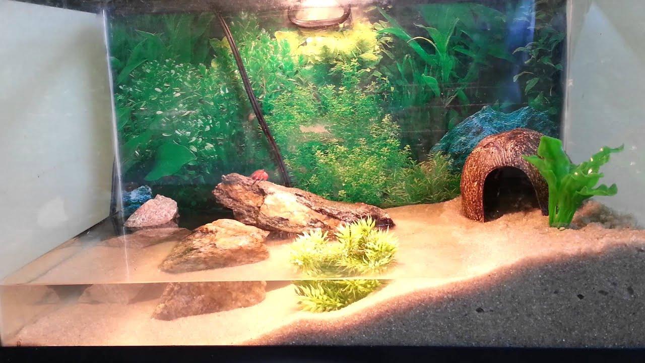 Как сделать песок в аквариуме 389