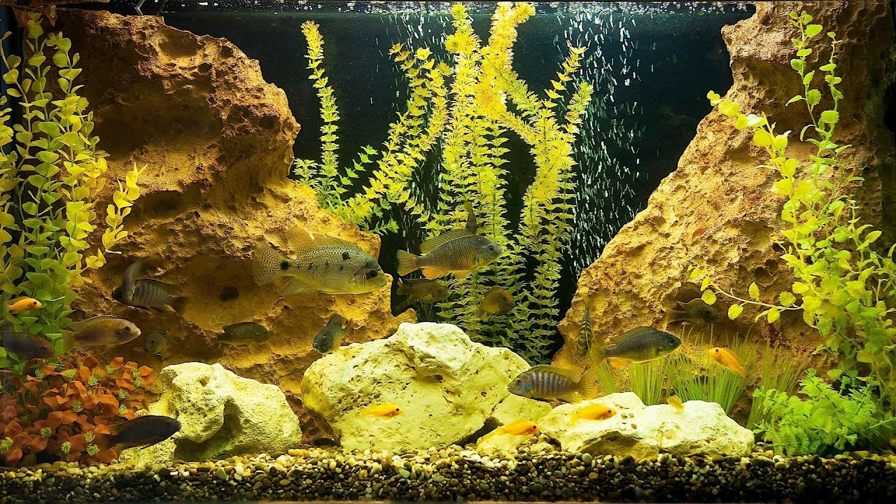 how to take care of fish tank plants