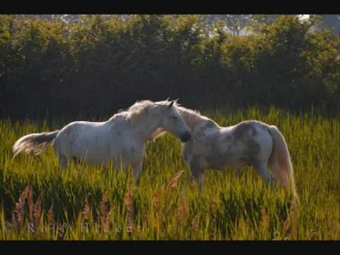 Enya-Wild Childs (Horses)
