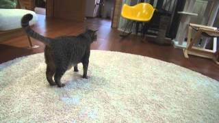 騙される猫
