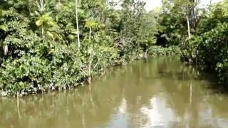 Amazonas Anaconda