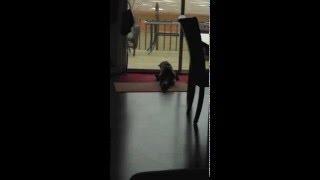[Dyna-e International Inc & Heath Detweiler Serious Cat Fight] Video