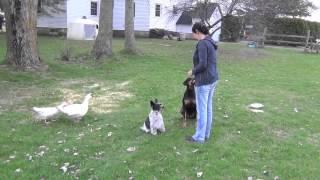 Jack un bébé chien pas comme les autres