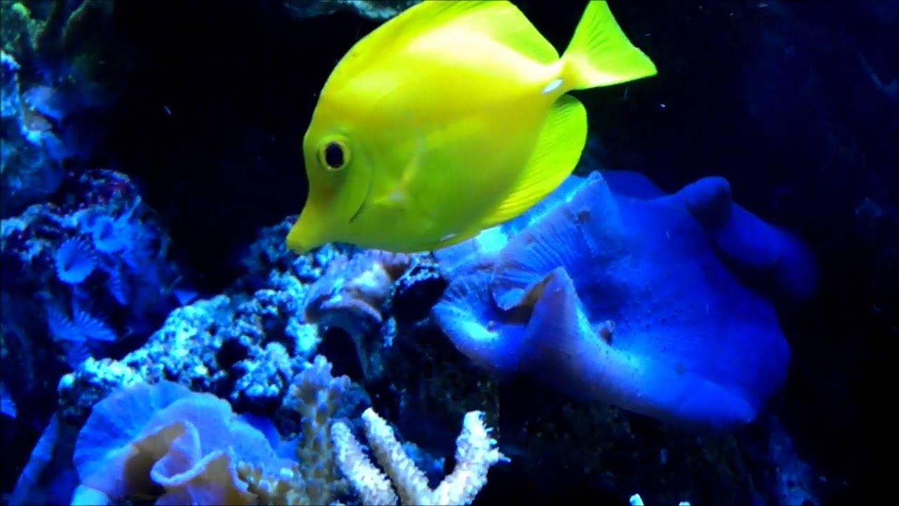 Saltwater aquarium organisms salt water organisms 2017 for Saltwater tank fish