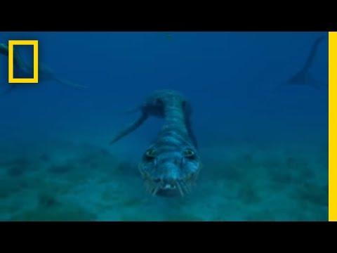 Mostri del mare (parte 0)