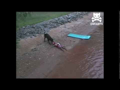 Pas izvlači dete iz vode