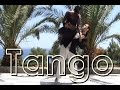 Tango Nuevo - Mabel Rivero and Junior Carvalho
