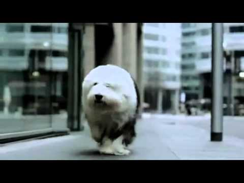 Dulux - The New Dulux Dog