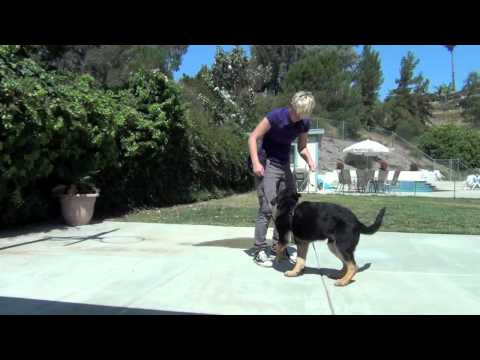 Drop it get it first lesson-dog training