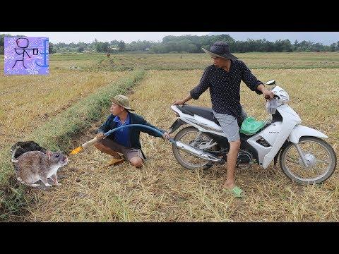 Experiment : Motorcycle Catch Mouse In Hole .Dùng Tiếng Pô Xe Để Dụ Chuột Ra Khỏi Hang