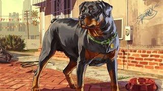 GTA V : How To KILL CHOP!? (The DOG)