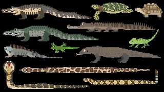 Reptiles - Snakes, Lizards, Crocodilians & Turtles - The Kids' Picture Show (Fun & Educational)