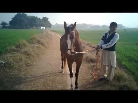 Beautifull Morning At My Village.  Gujrat Punjab Pakistan