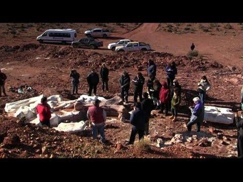 Fossils of 'largest' dinosaur found in Argentina