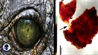 SHOCK REPORT: Dinosaurs Only 20,000 Years Old? 5/22/17
