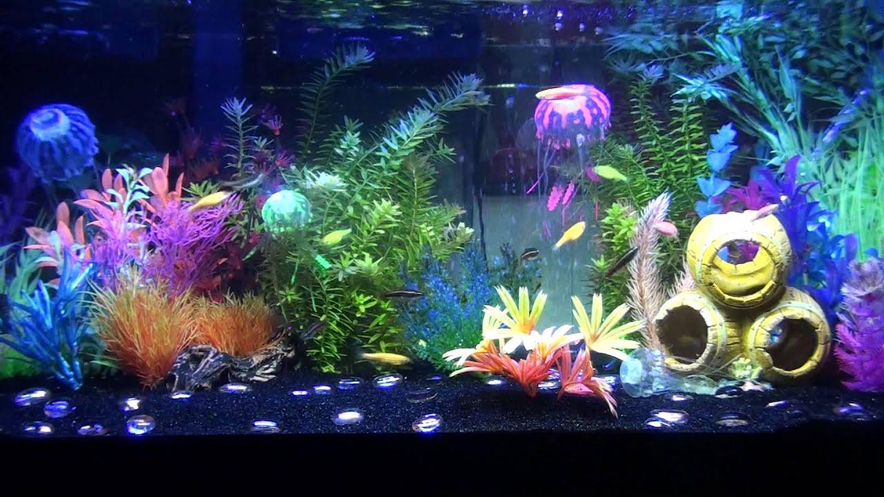 3 30 13 Progress Of Glofish Tank Youtube