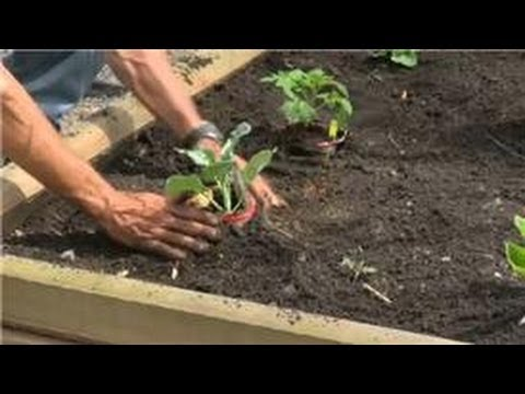 Gardening Basics : How to Grow Organic Vegetables in a Raised Bed