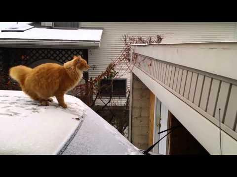 Biểu Diễn Parkuor Thất Bại, Quá Đen Cho Đội Mèo Vàng