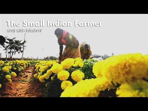The Small Indian Farmer