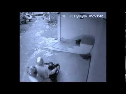 Cận cảnh trộm chó ở Nghệ An