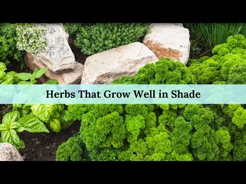 Herbs That Grow Well in Shade