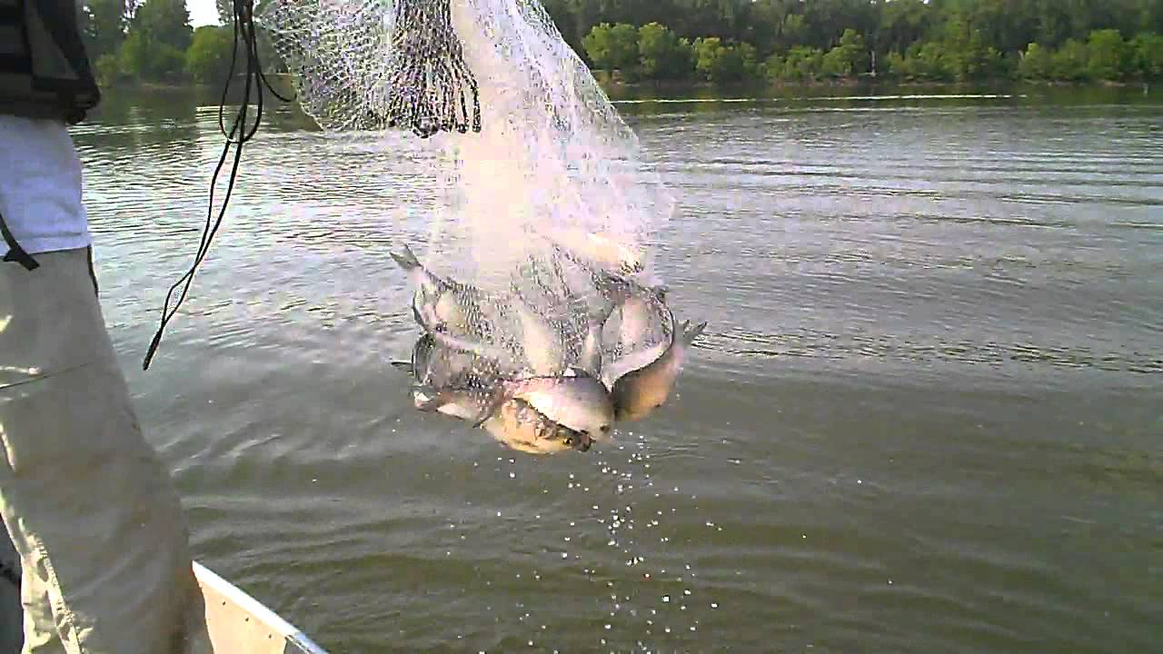 Как называют небольшой невод которым ловят рыбу на мелководье