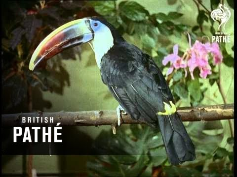 Reptiles And Tropical Birds - Africa Aka Wild Animals (1955)