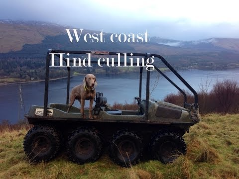 West Coast of  Scotland red deer culling.