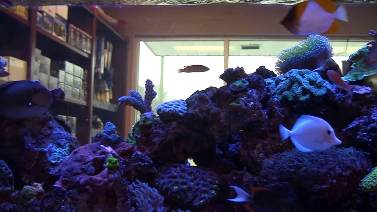 Marine designs saltwater aquarium store atlanta youtube for Saltwater fish store