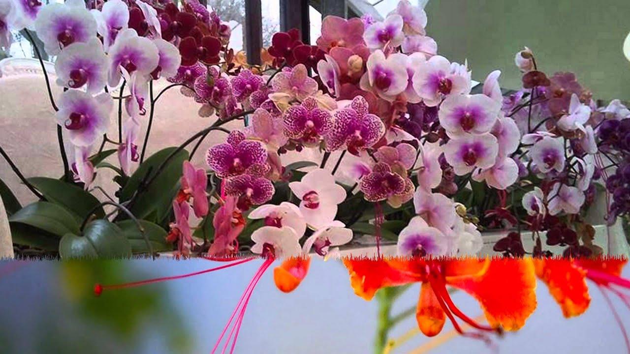 La Multi Ani de Florii Happy Anniversary Flowers