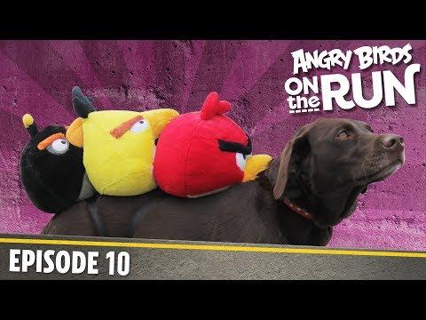 Angry Birds on The Run - 10 - Na cestách