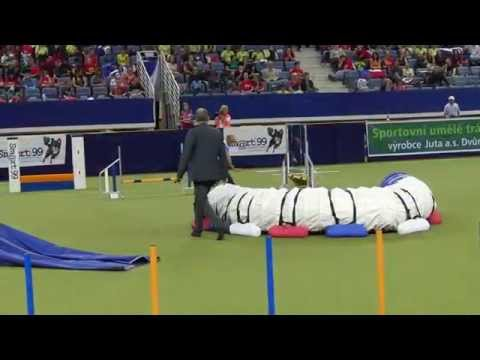 Agility World Championship 2012 FAIL & FUN MOVIE by www.DogSports.cz