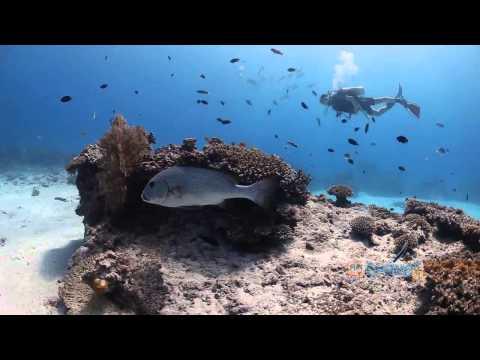 Great Barrier  Rặng san hô lớn và đẹp nhất thế giới   Truyền hình VietNamNet