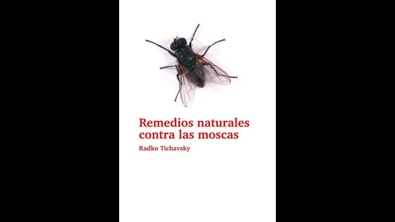 Remedios naturales contra las moscas youtube - Como combatir las moscas ...