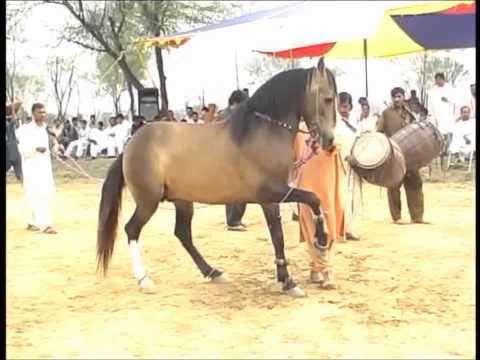 Sultan dancing at Dadyal horse dance mela