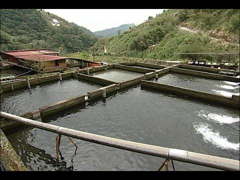 我們的島 第443集 石門水庫119 (2008-03-03) - YouTube