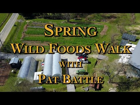 Spring Wild Foods Walk with Pat Battle
