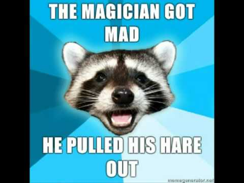 raccoon meme Pun