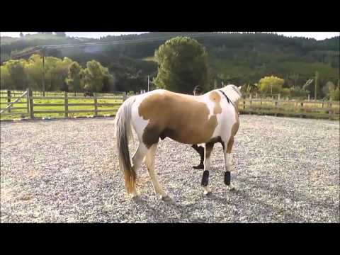 Goldcard learning to free jump & Free Ride 1 year ago (Old footage)