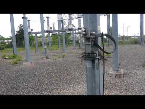 Surprise babies in the 115,000 volt substation!