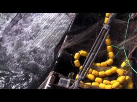 Going In-Seine in Alaska – Intro –